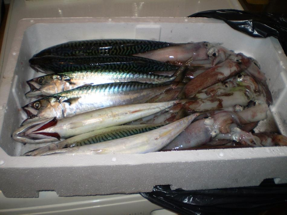 mackerel and squid